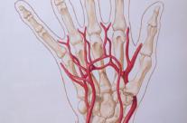 Deep Vasculature