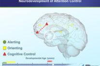 Neurodevelopment of Attention Control